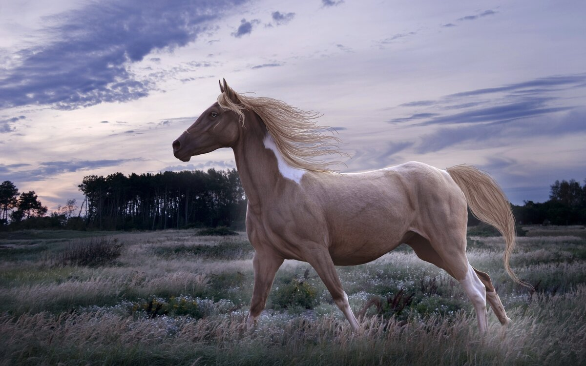 Шикарные картинки с лошадьми