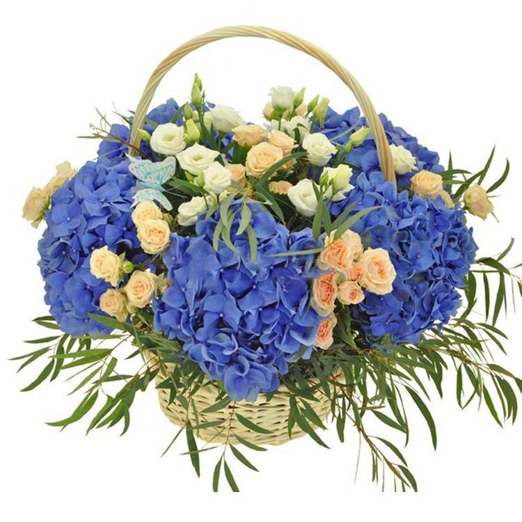 Кострома оптовые, синяя гортензия букет мужской