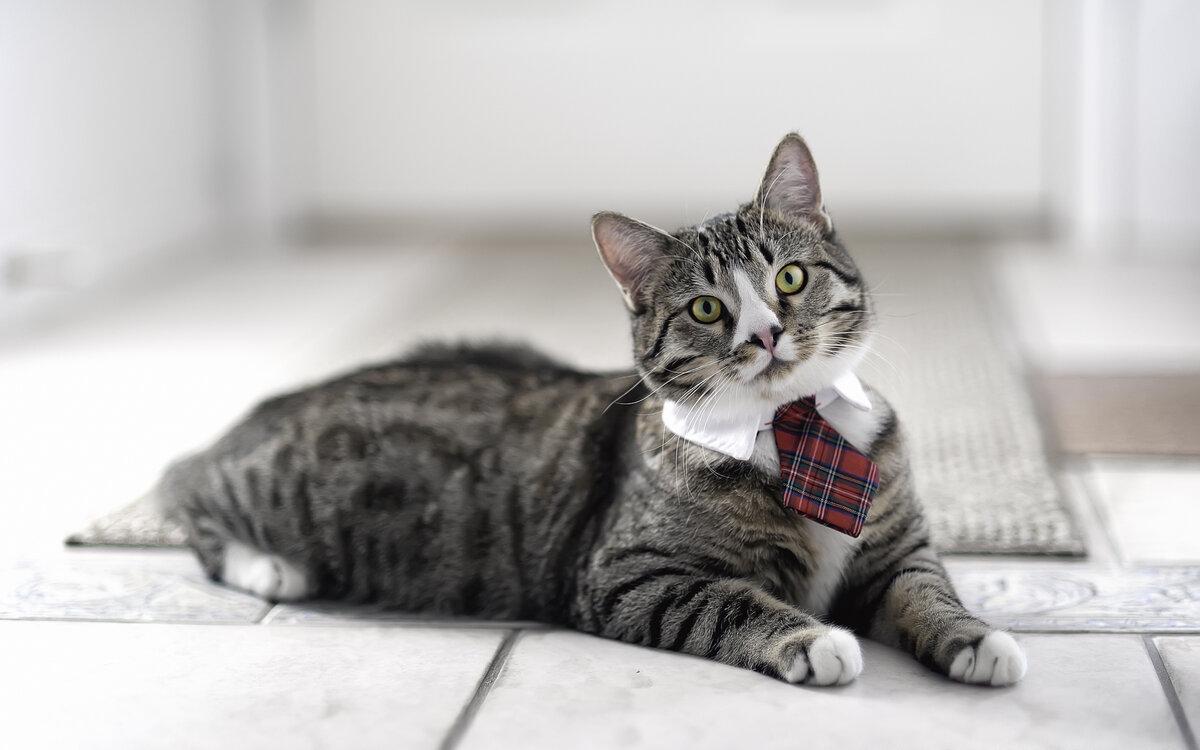 Картинки кошки интересные, днем рождения