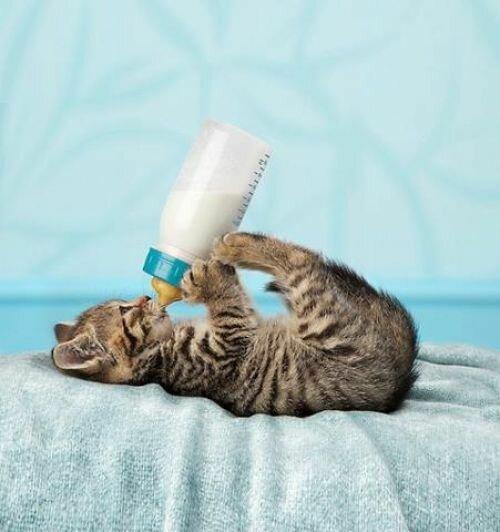 #Кот, #Котаны, #Котейка, #Котики, #Котэ, #Кошка, #Коте, #Котя, #Котяра, #Котята