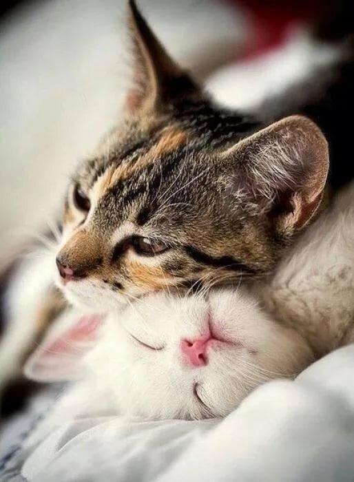 Спокойной ночи картинки с котятами голубые и зеленые