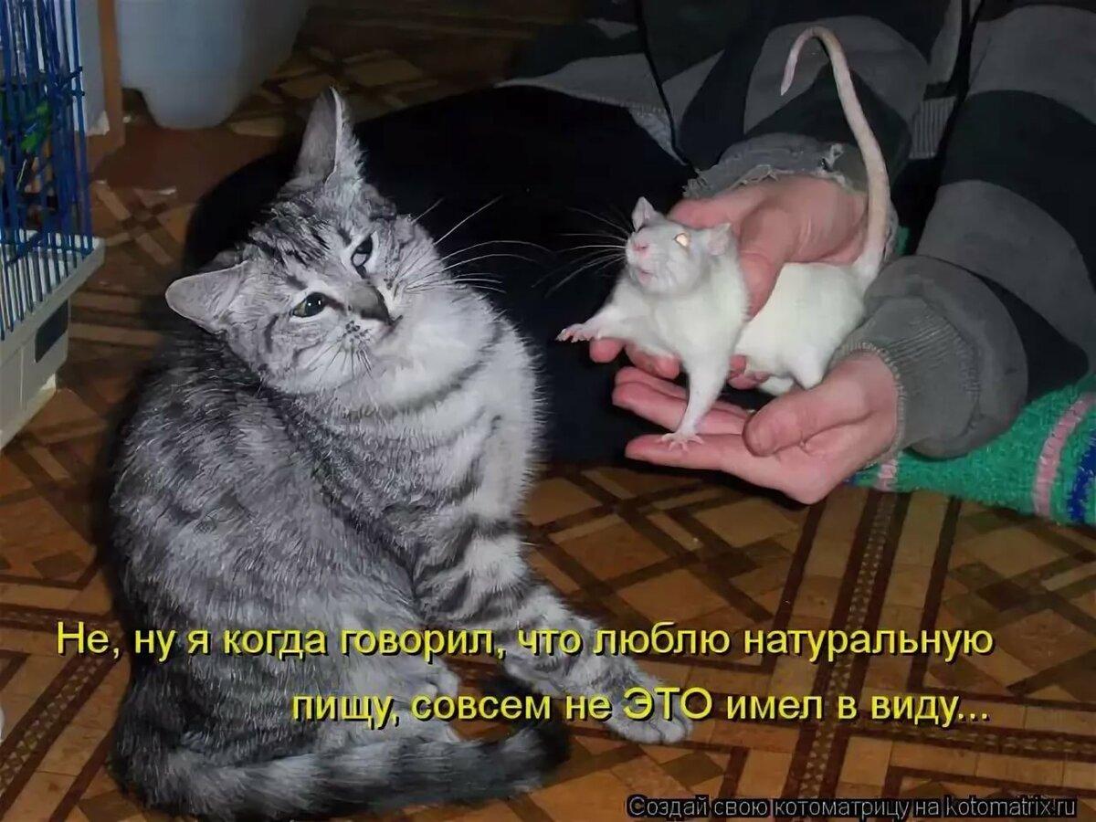 Картинки про котов смешные с надписями грыз провода