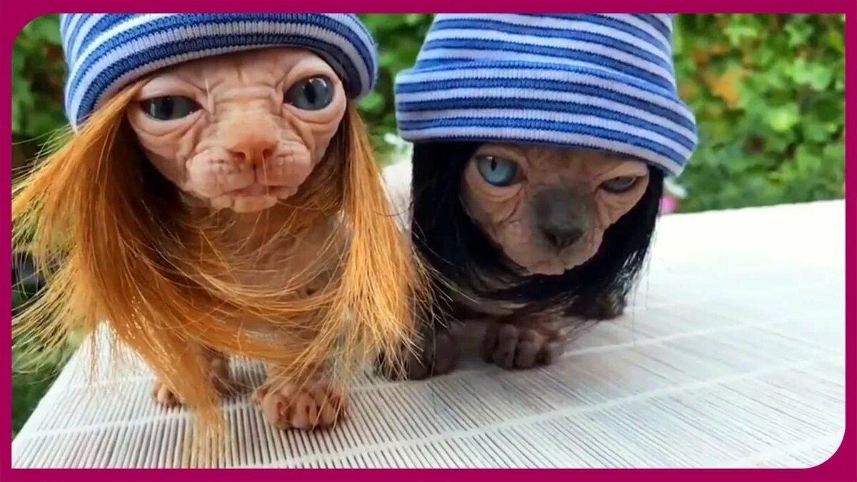 Днем рождения, фото смешные животные с надписями 2018