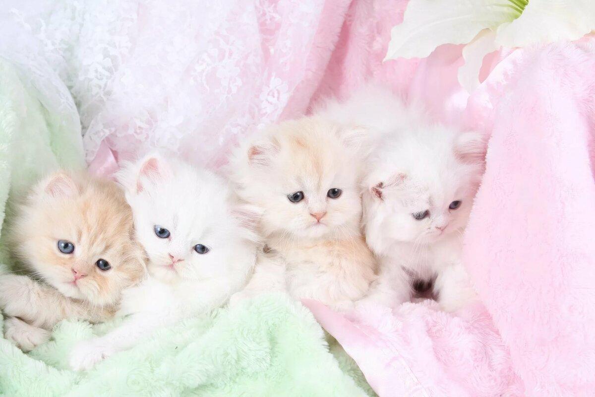 картинки с милыми и пушистыми котятами
