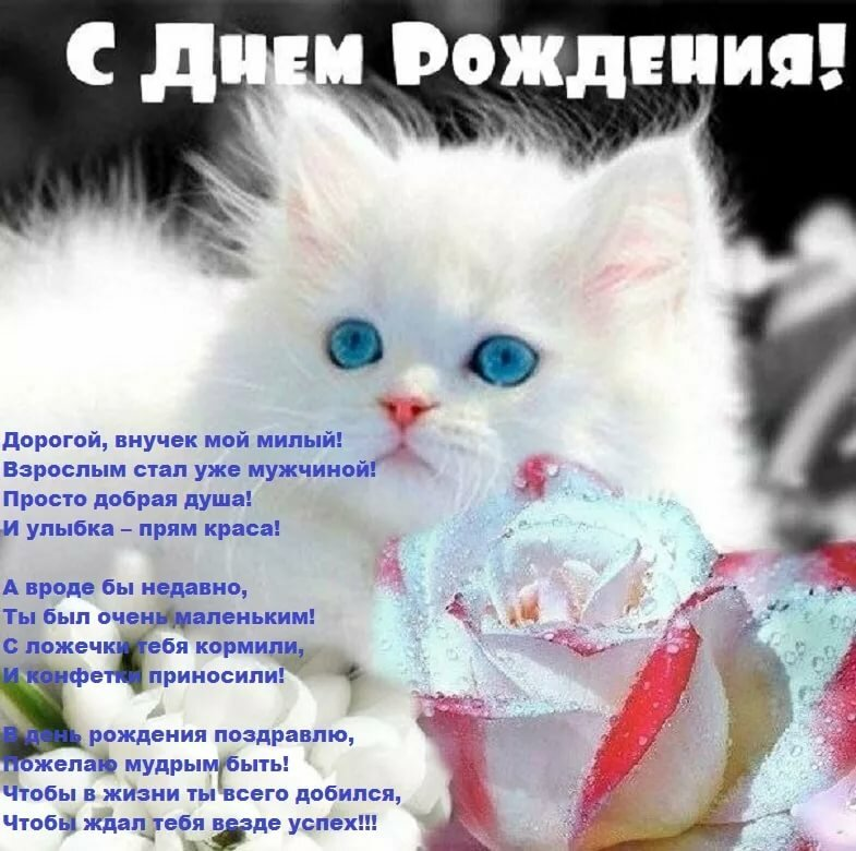 С днем рождения картинка кошки