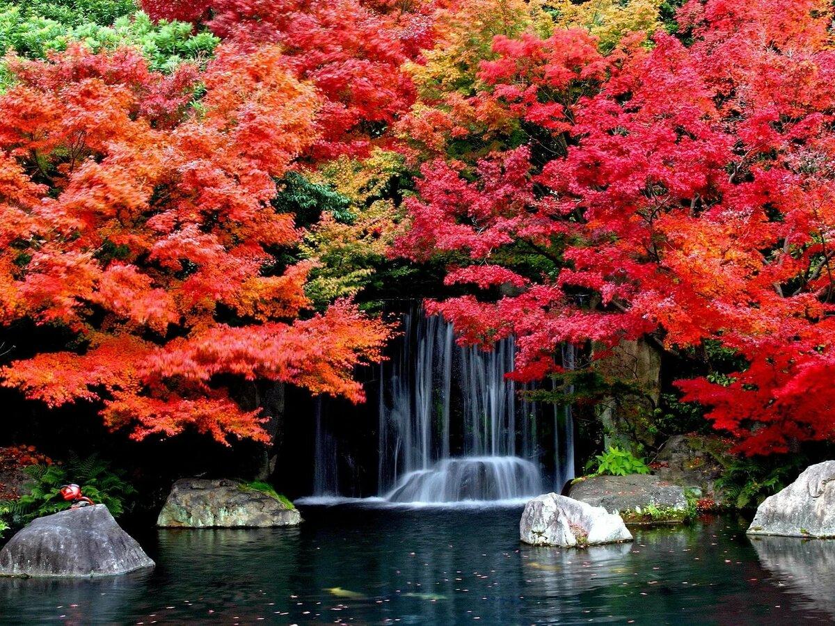 неё картинки на телефон красивые природа осень длилось долго, очень