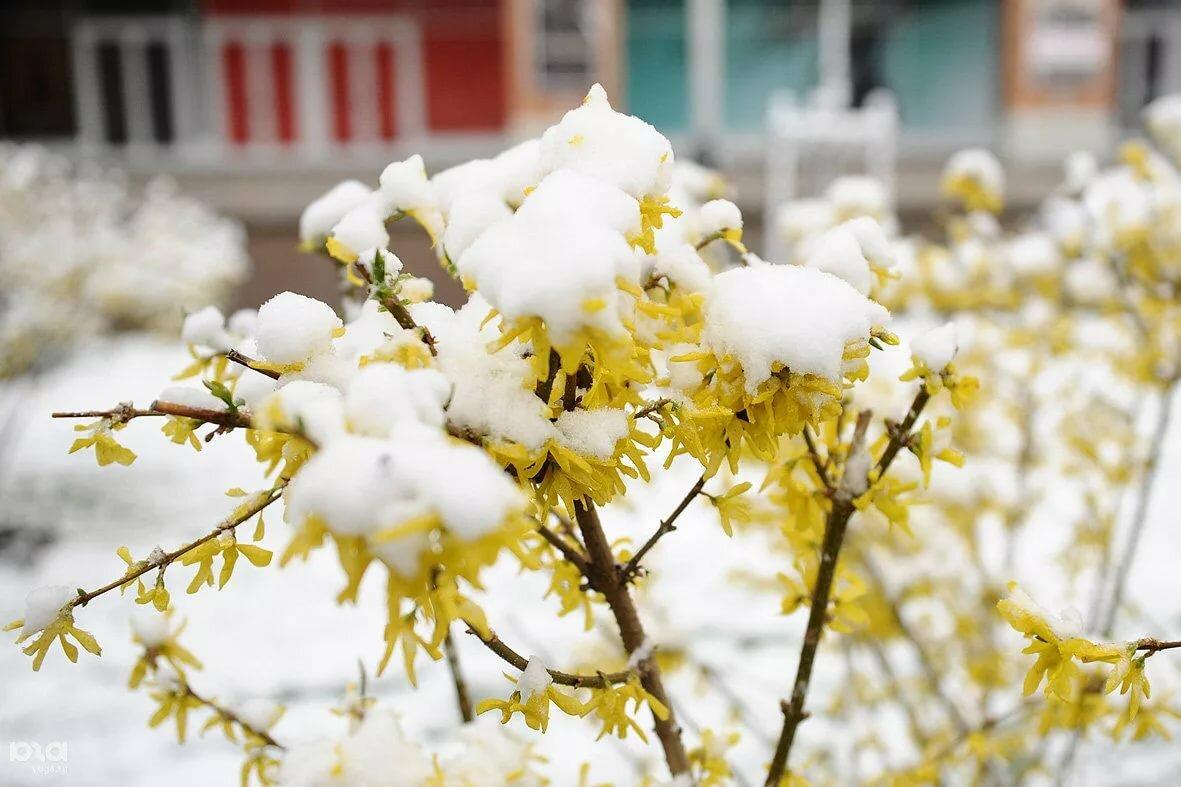 весна фото снег совместных занятий