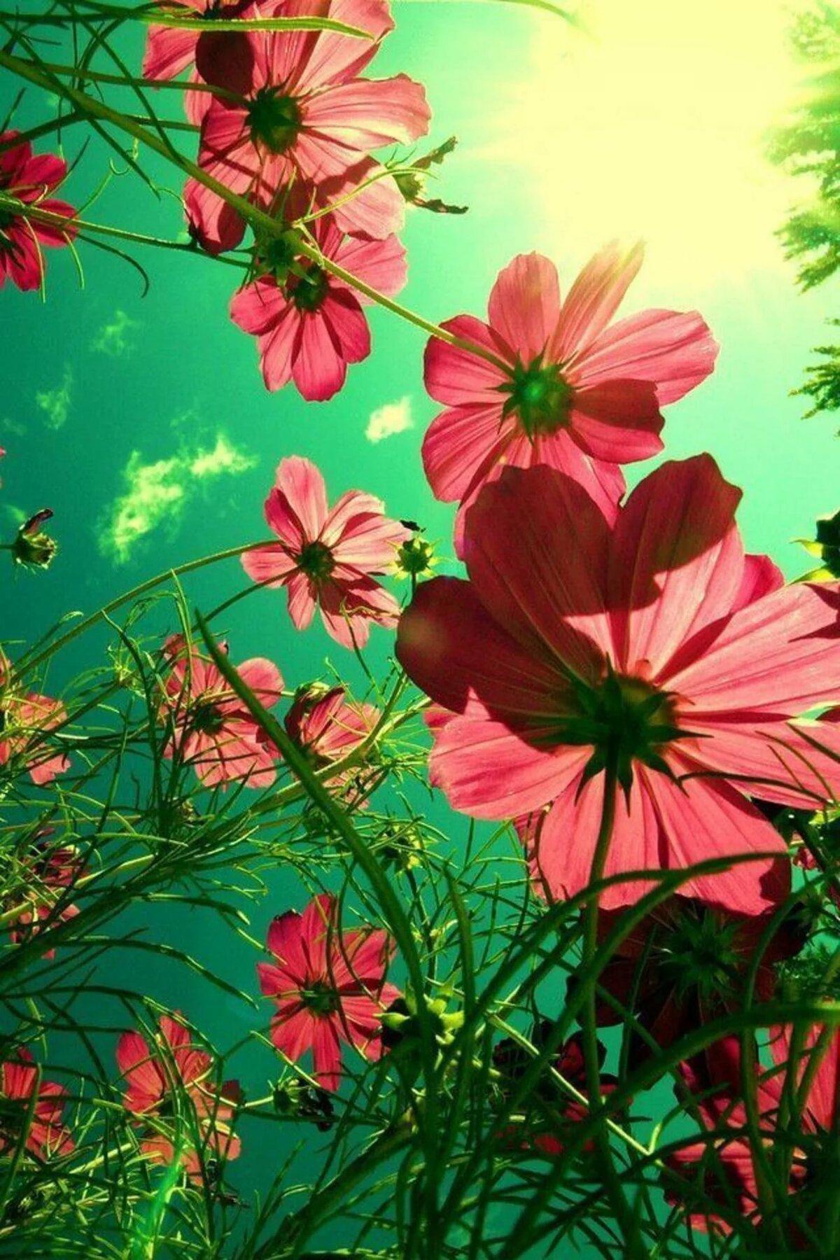 Любви для, картинки для мобильного телефона цветы