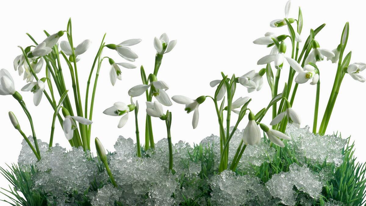 Картинки с весенними цветами и надписями