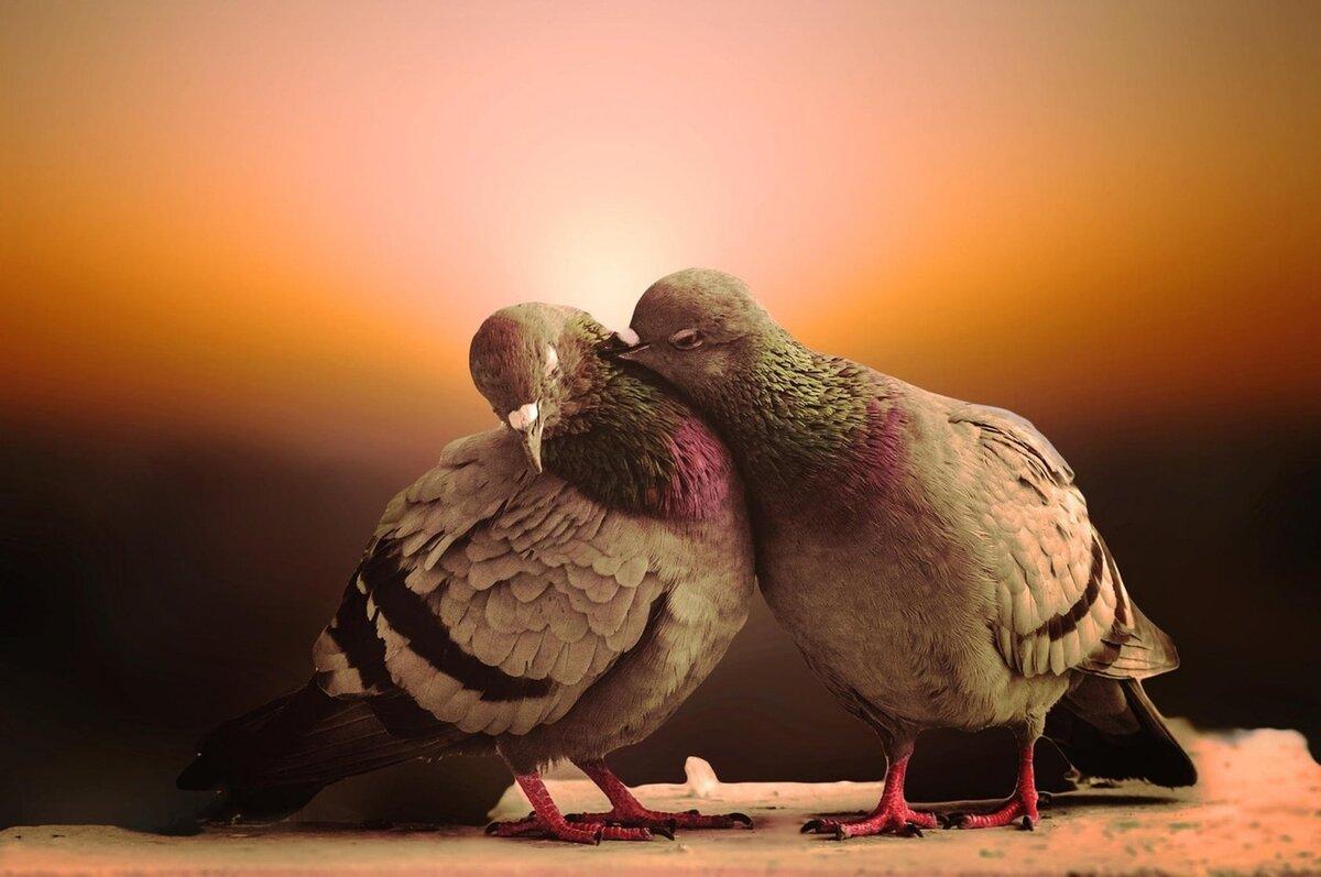 как правильно голубь обнимает картинки проклова достаточно