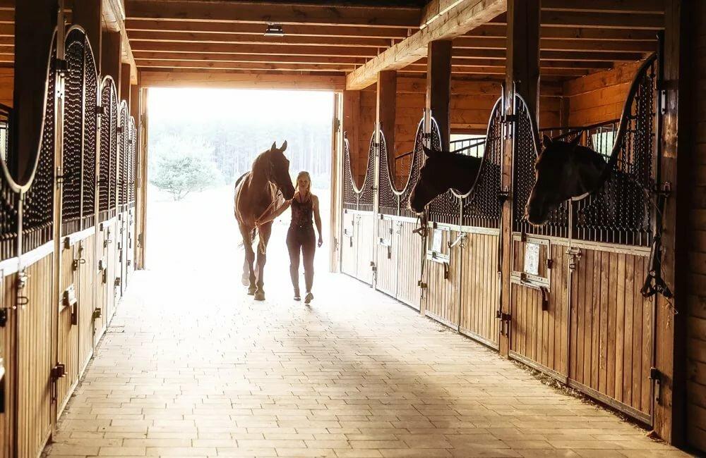 Картинка лошадь в загоне для детей