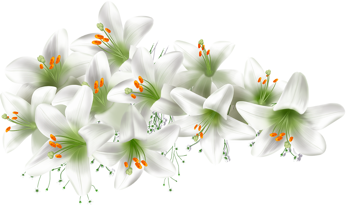Цветы белые картинки для фотошопа, летие