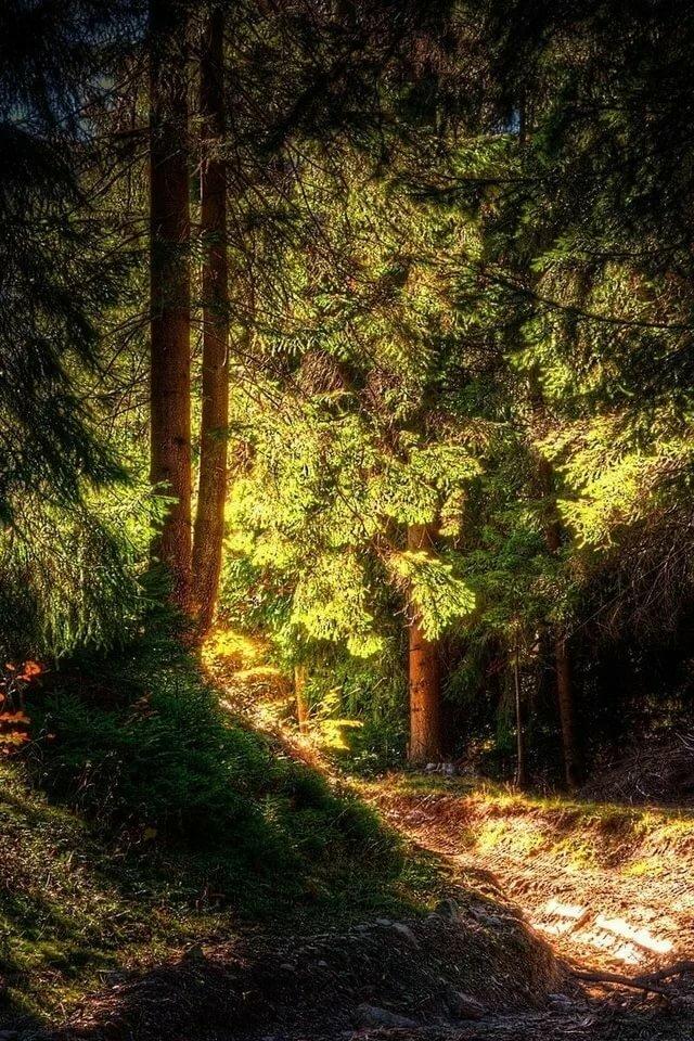 лес картинки фото на телефон нокиа инструменты