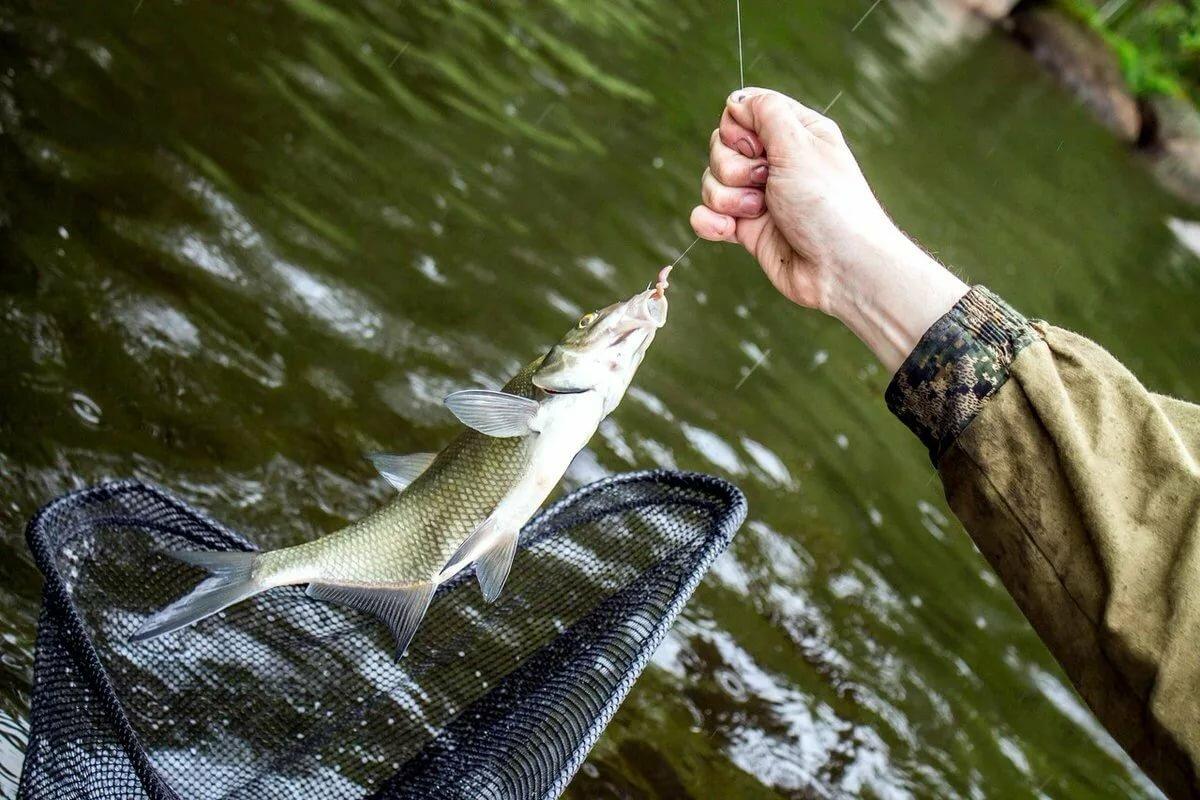 отзывы, картинка рыба поймала рыбака недвижимости специалисты
