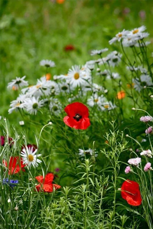 Открытки юбилеем, цветы полевые анимации картинки