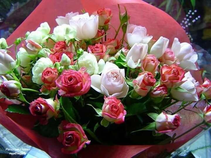 Розы для доченьки картинки