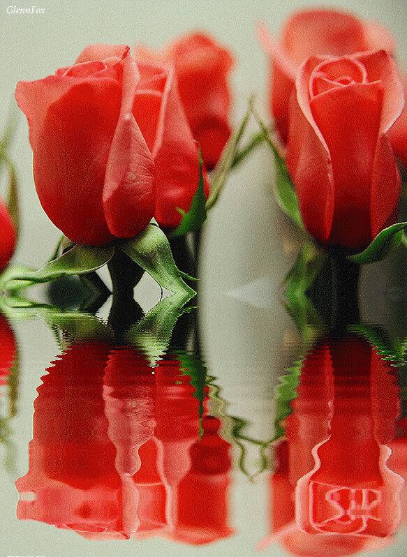 тебе цветы картинки с движением