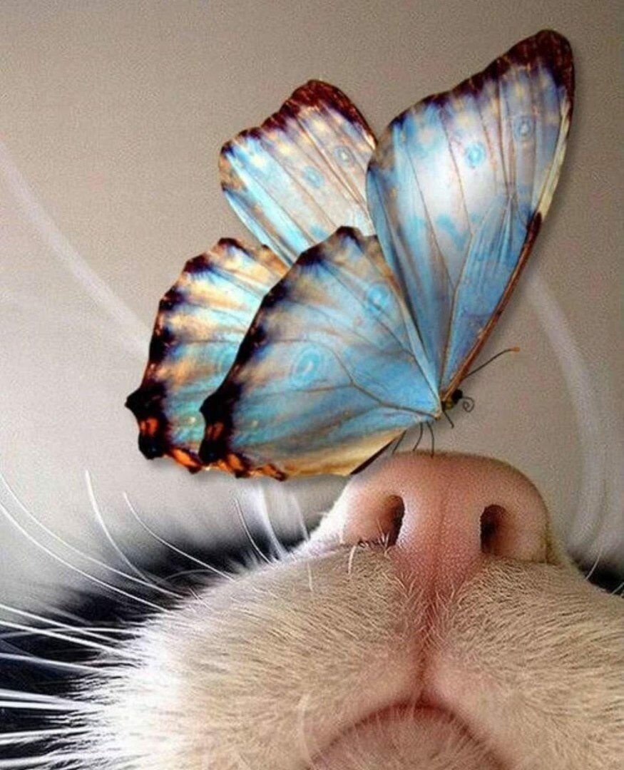 Открытка, картинки бабочки прикольные