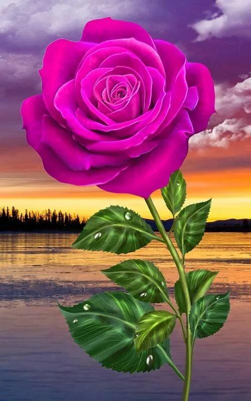 Розы картинки на телефон