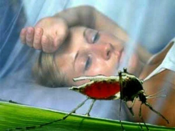 Лабораторная диагностика и лечение малярии.