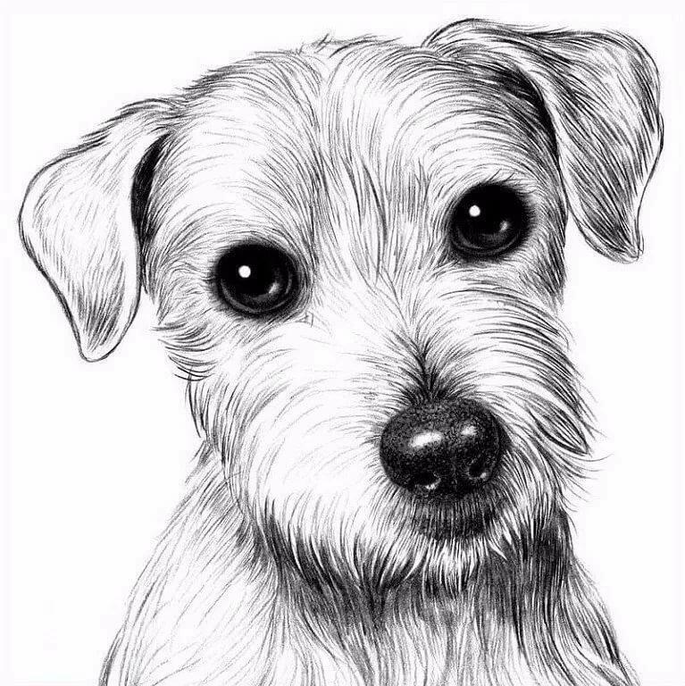 картинки для собак рисовать