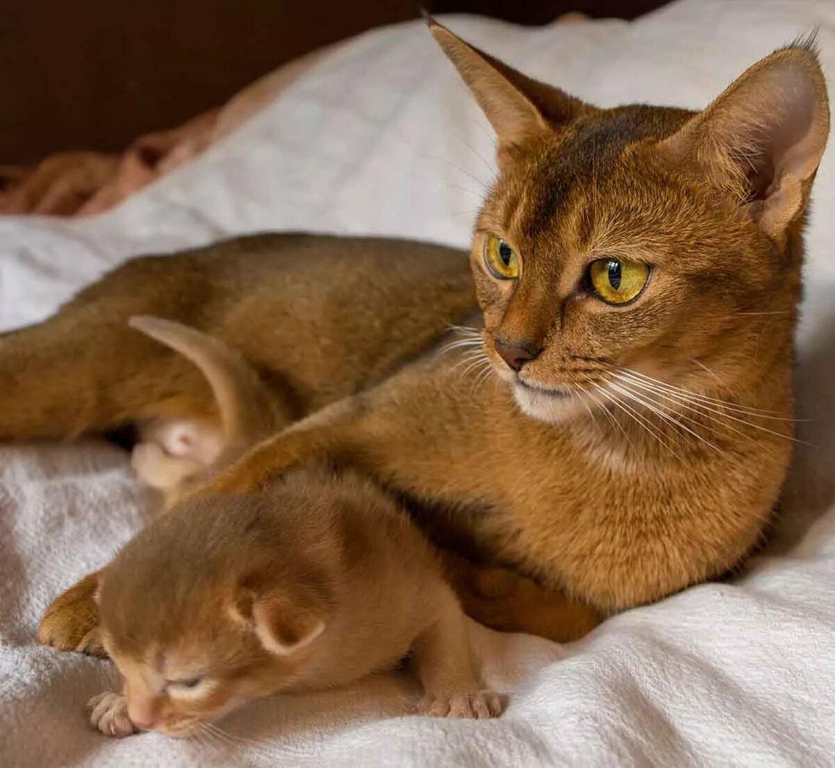 Картинки и породы котов смотреть