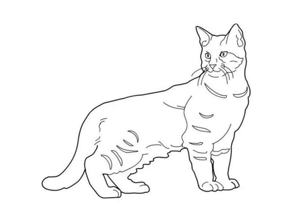проекта картинки котиков черно белые с контуром пусть меня