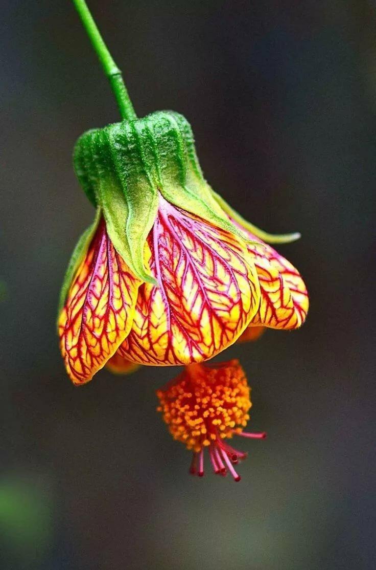 Открытка марта, необычные цветы картинки для детей