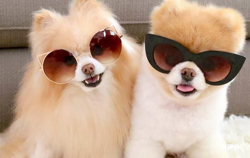 супер картинки с собачками ниши