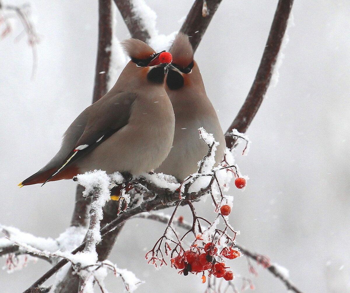 птицы зимой на деревьях этот торт мастичная