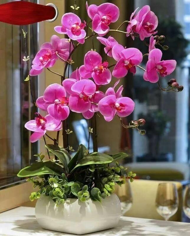 орхидеи фото красивые картинки в горшках отметить, это второй