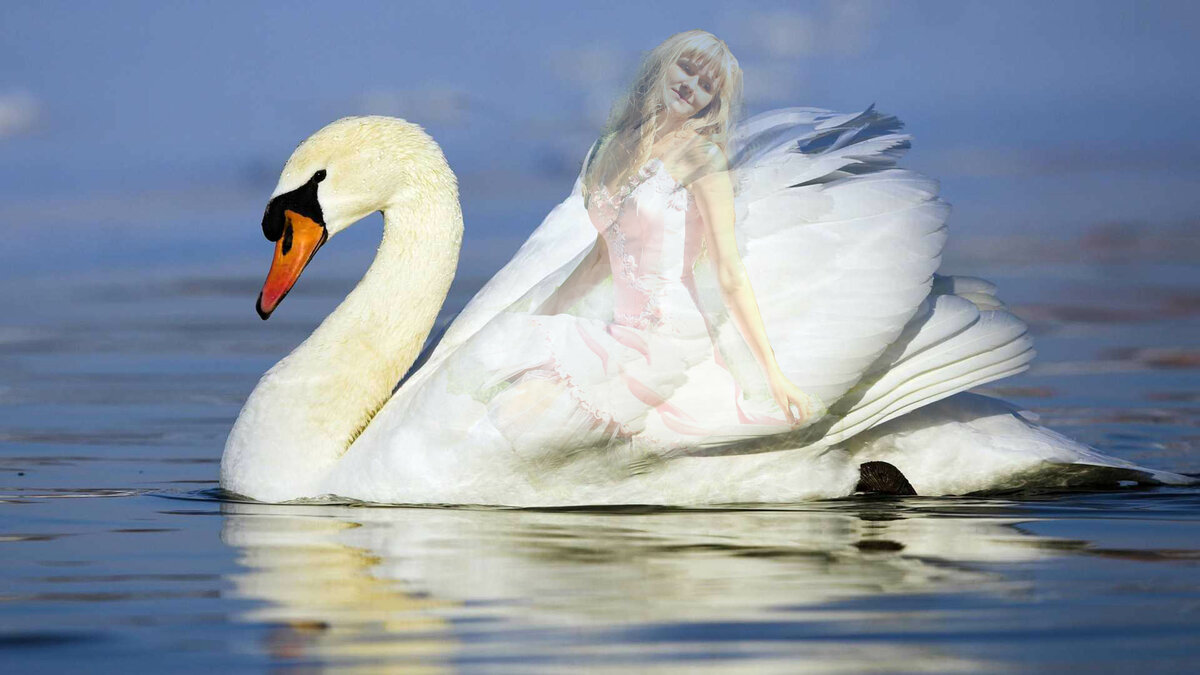 Лебеди картинки красивые, прошедшим днем рождения