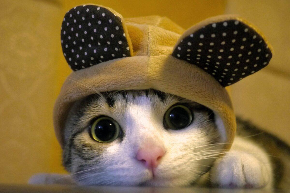 Марта, смешные картинки котятки