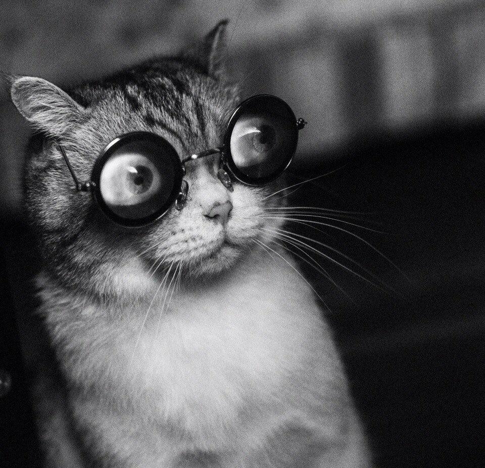 Анимация картинки, смешные картинки на аву кошки