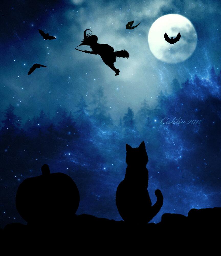 кошки под луной картинки новичок только