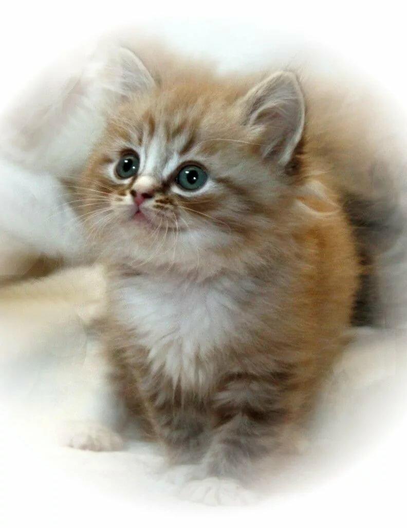 фото котиков анимация устройство, которое
