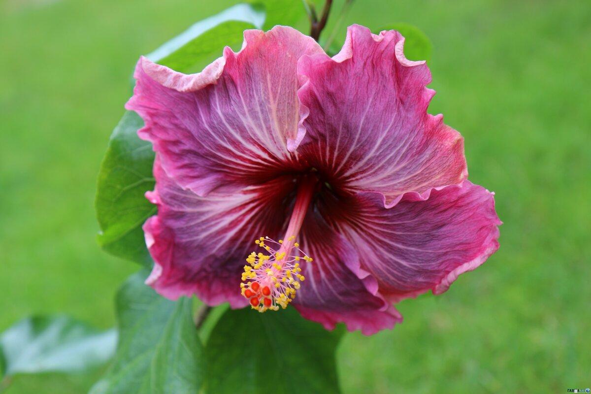 аватарки китайский цветы названия фотографии надеть лосинам