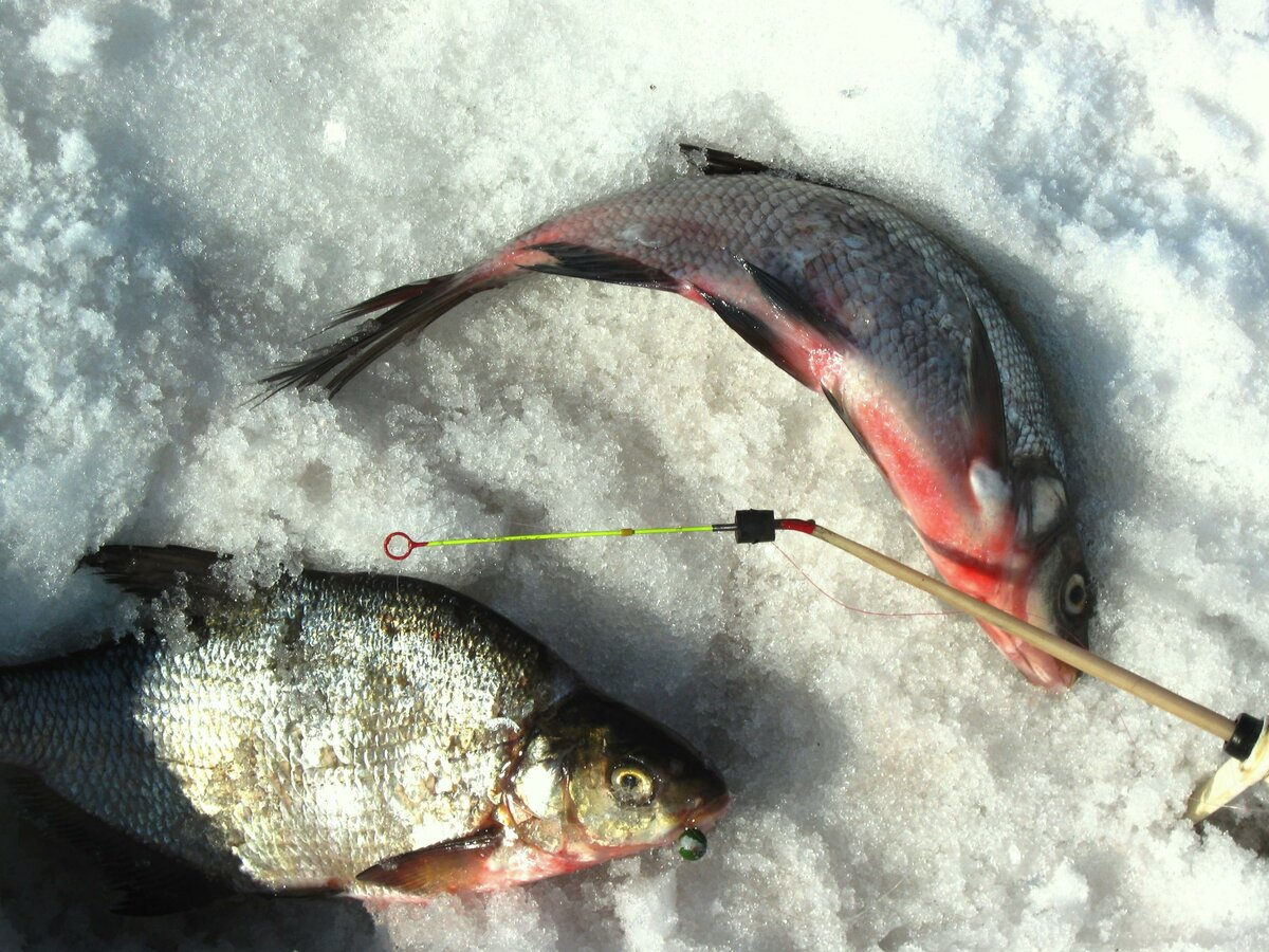 Зимняя ловля леща мормышка