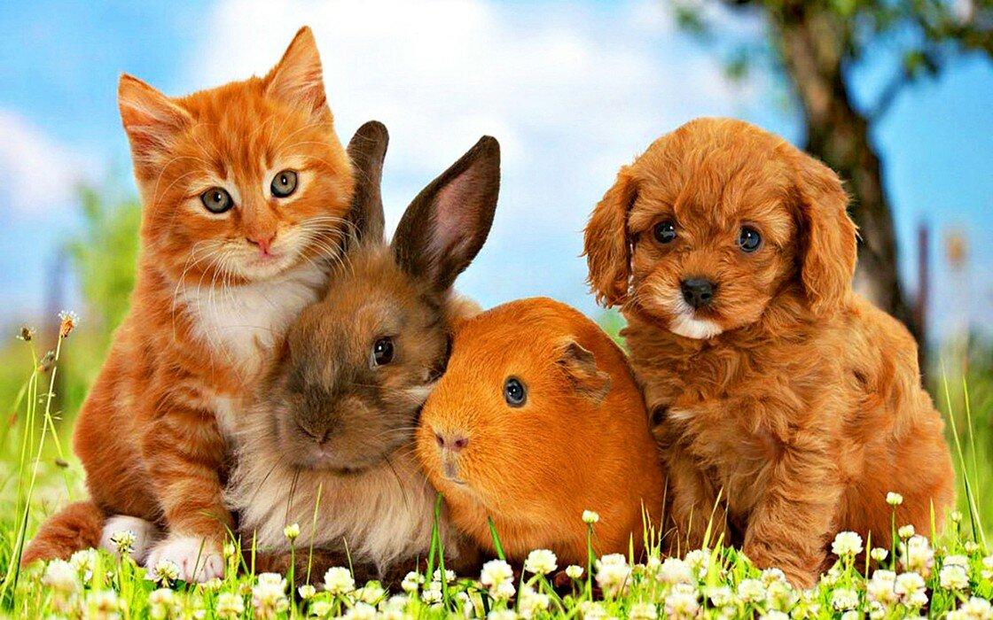 Открытки на тему животные, план открыток ручной