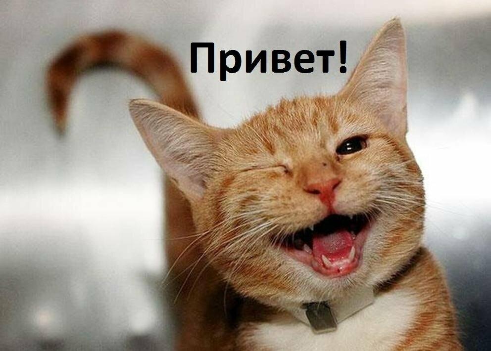 Радостного настроения картинки веселые