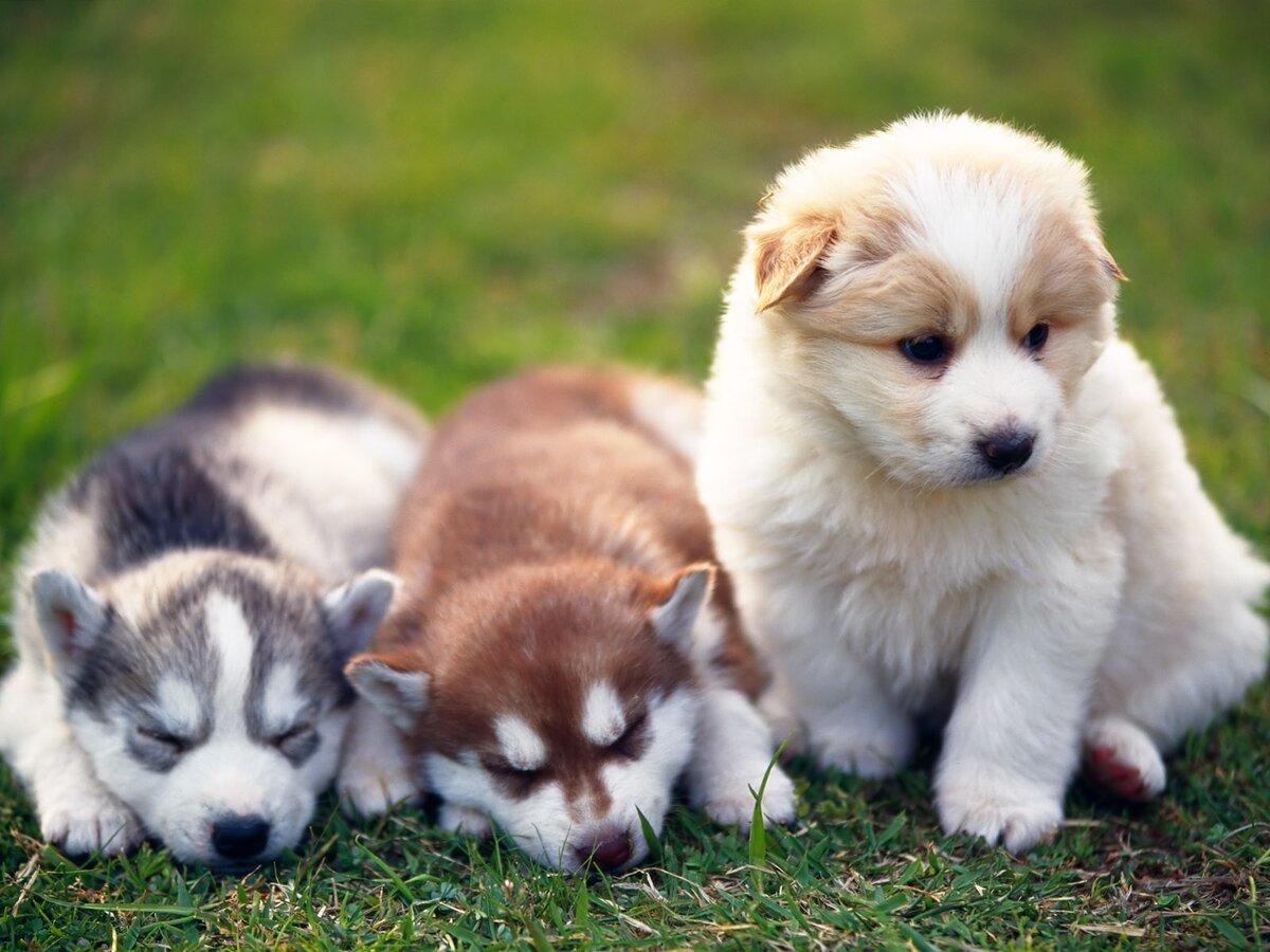Посмотреть картинки щенков