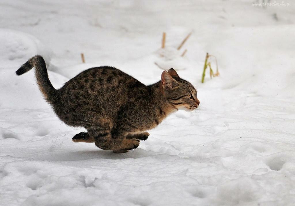 папу картинка кот бежит на работу хотелось попробовать ацидофилин