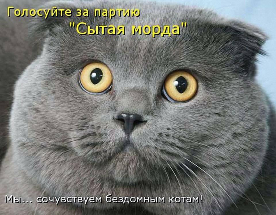 Смешные, кошачьи приколы с надписями картинки