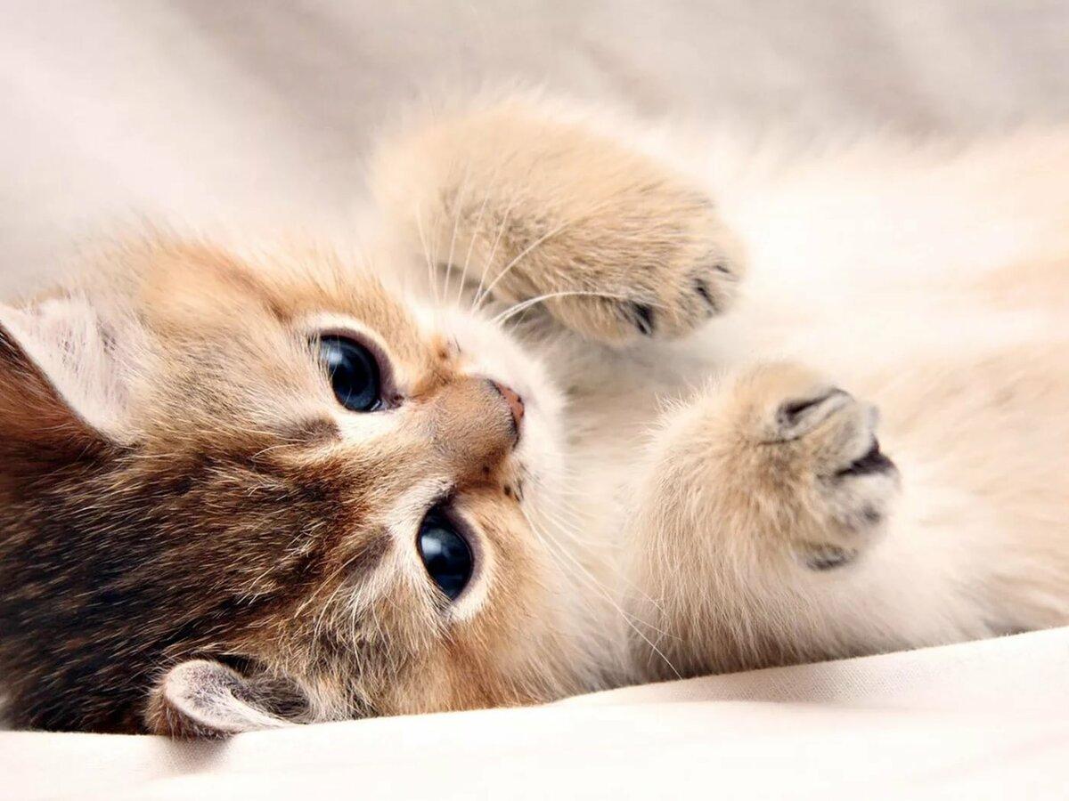 картинки для планшета про котят чувствовала