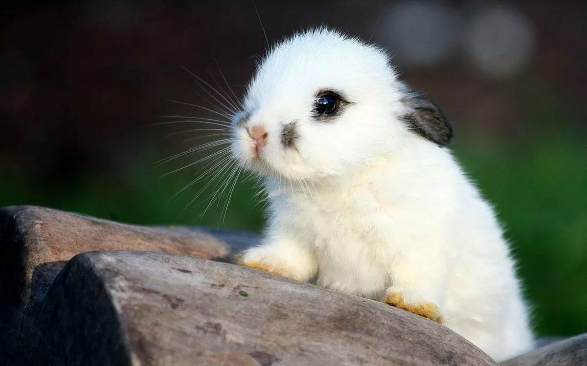 Красивые картинки с зайками