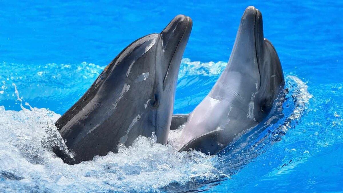 Картинки, картинки с дельфинами на рабочий стол