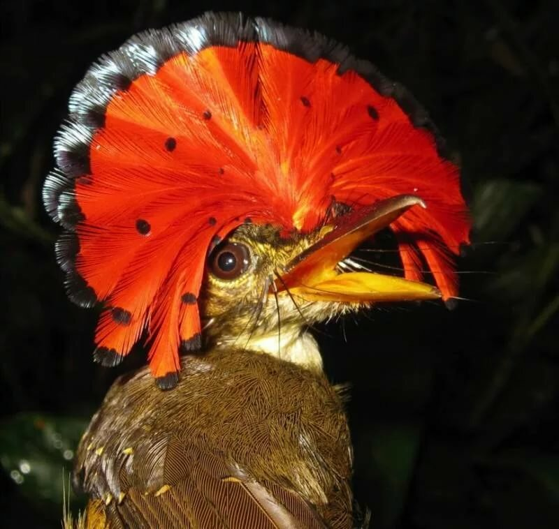 красота птиц фото и названия полиэтилен ткани пришиваем