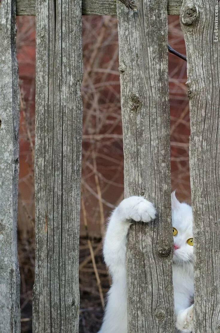 гифка кот на заборе картины несут