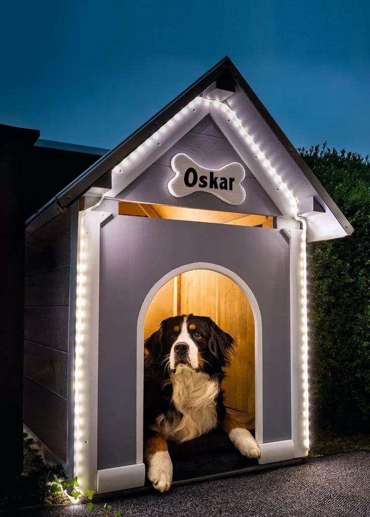 Картинки собака возле будки