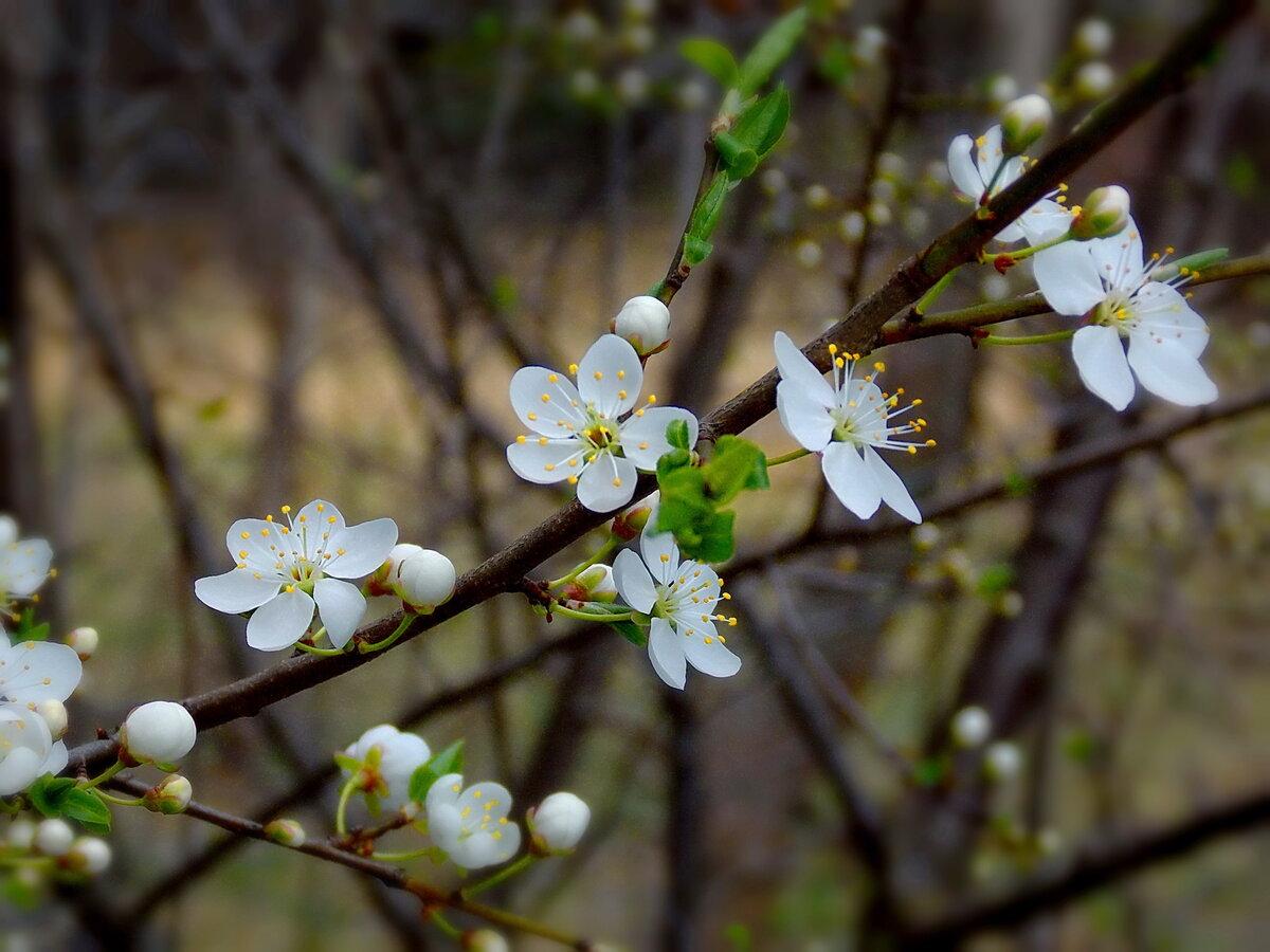 если дыхание весны фото объективы позволяют фотографировать